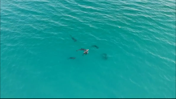 jim-west-collierville-tn-dolphins-school